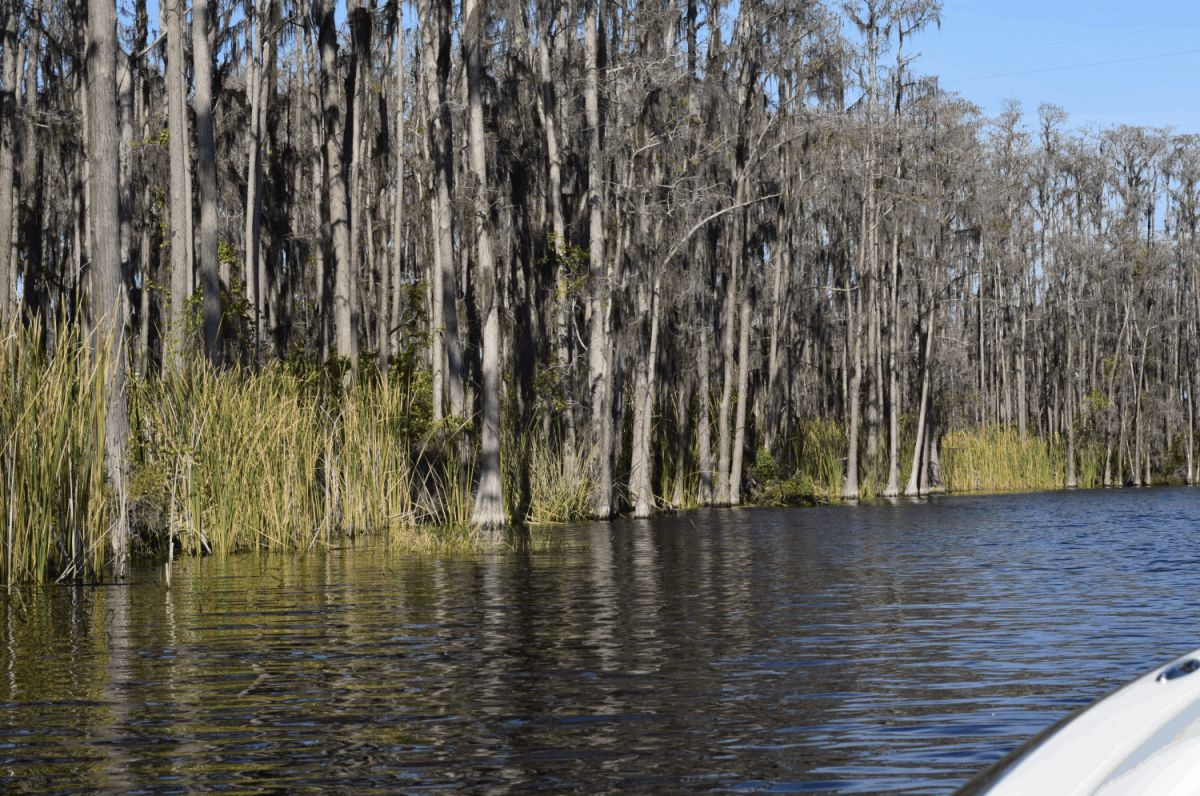 Bass Fishing Habitat